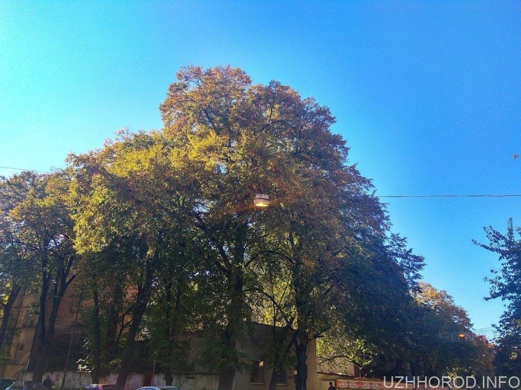 Ужгородська міська рада. Позитив.