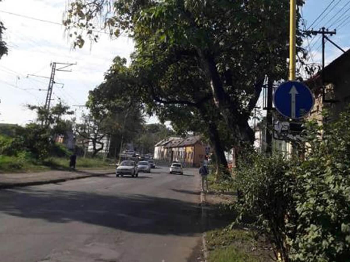 На вулиці Анкудінова в Ужгороді обрізатимуть аварійні дерева