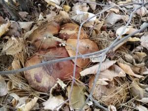 Біля Стрипи загубилися два ужгородці, збираючи гриби