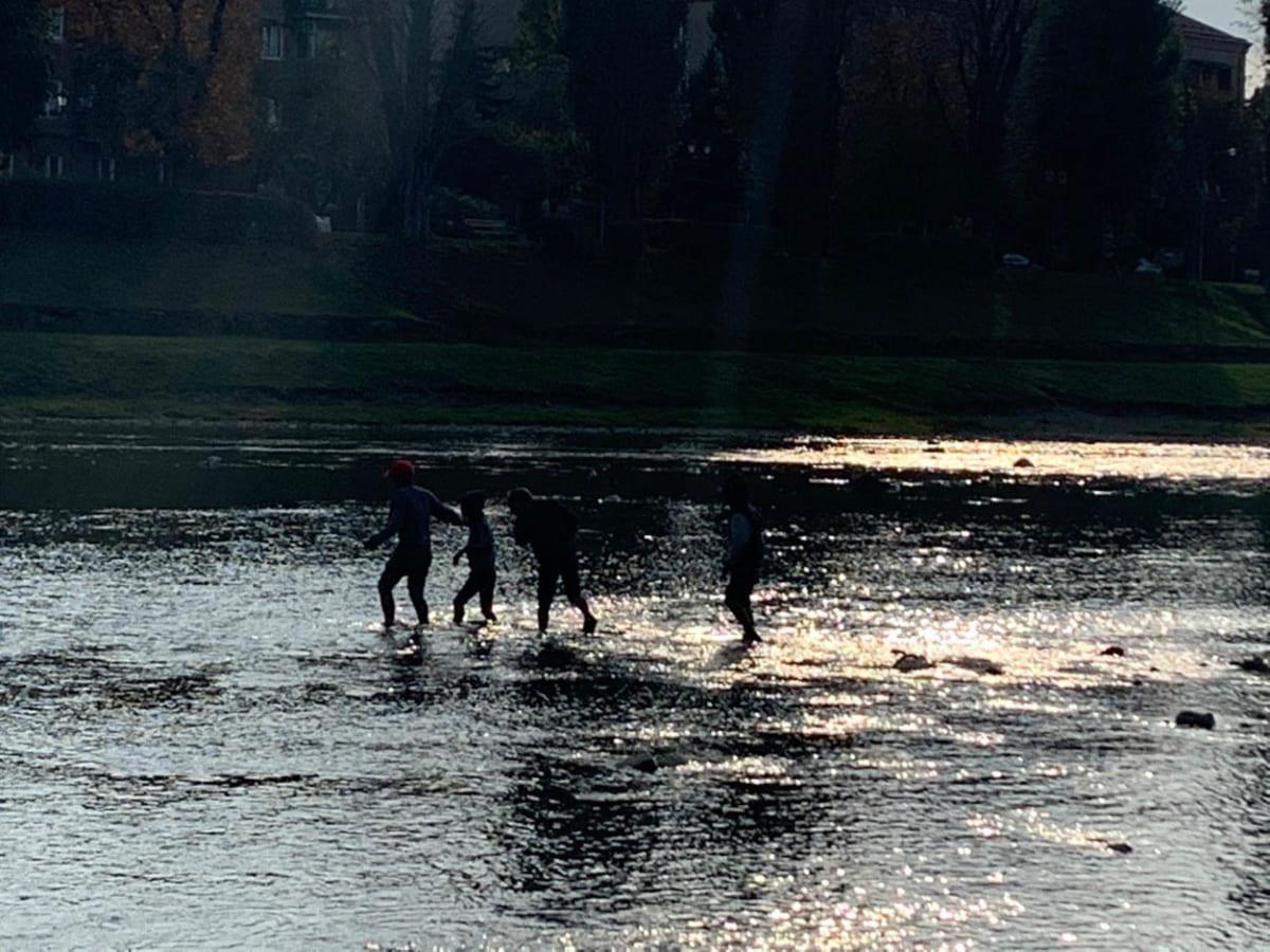 На річці Уж в центрі міста цигани намагалися закидати камінням лебедя (ФОТО)