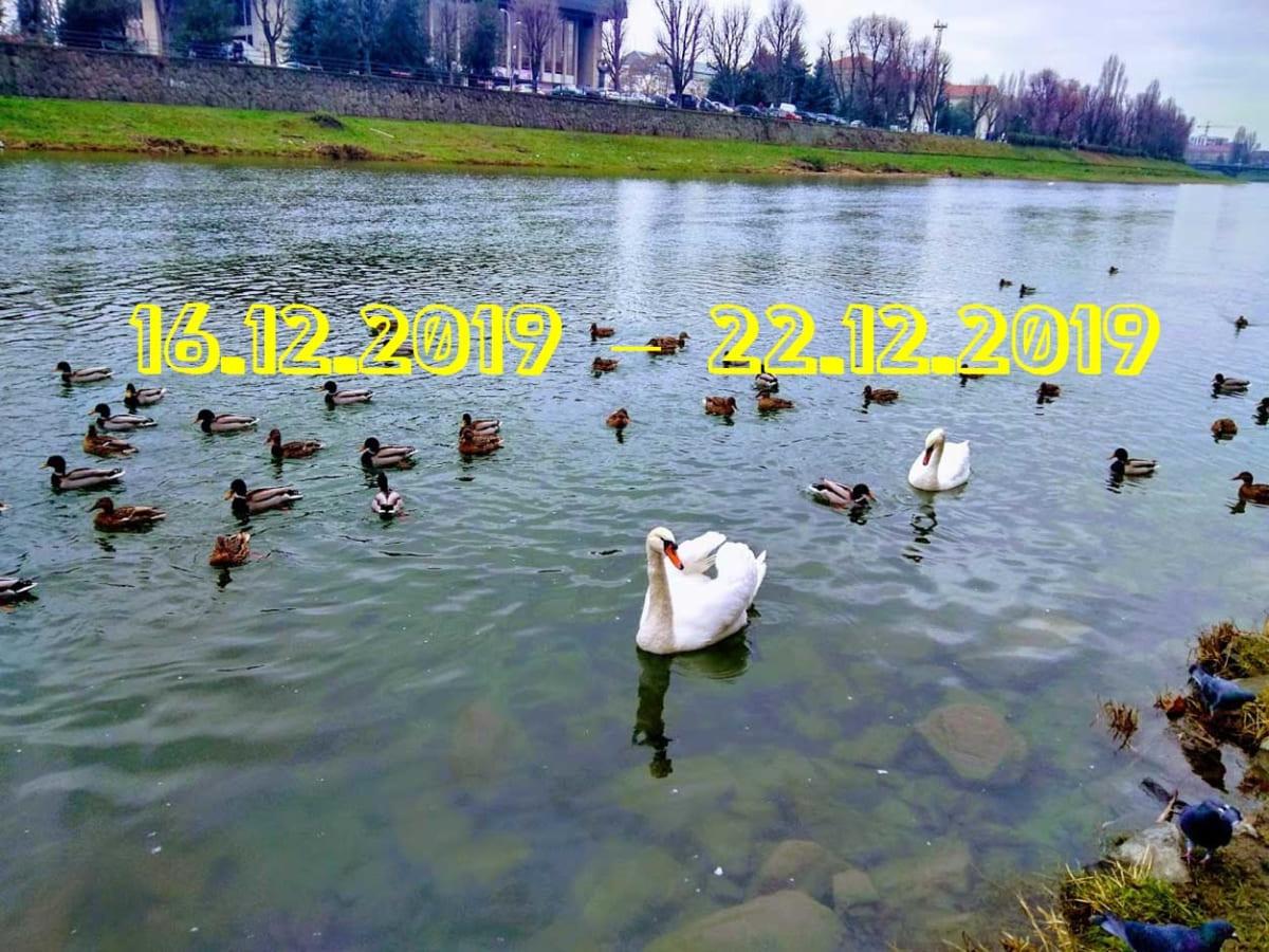 Гороскоп на 51 тиждень 2019 року (16.12.2019 – 22.12.2019)