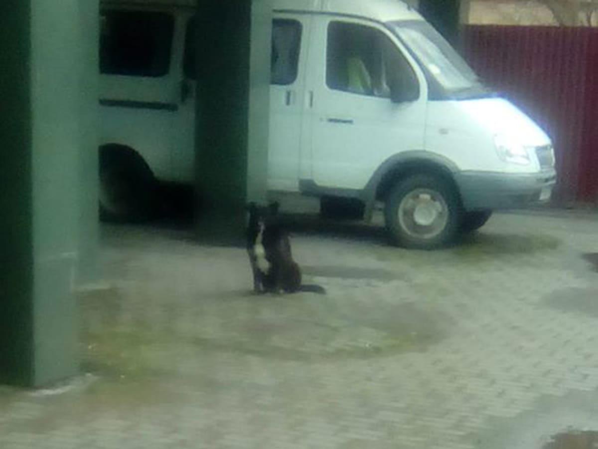 Ужгородців кусають собаки біля центру зайнятості