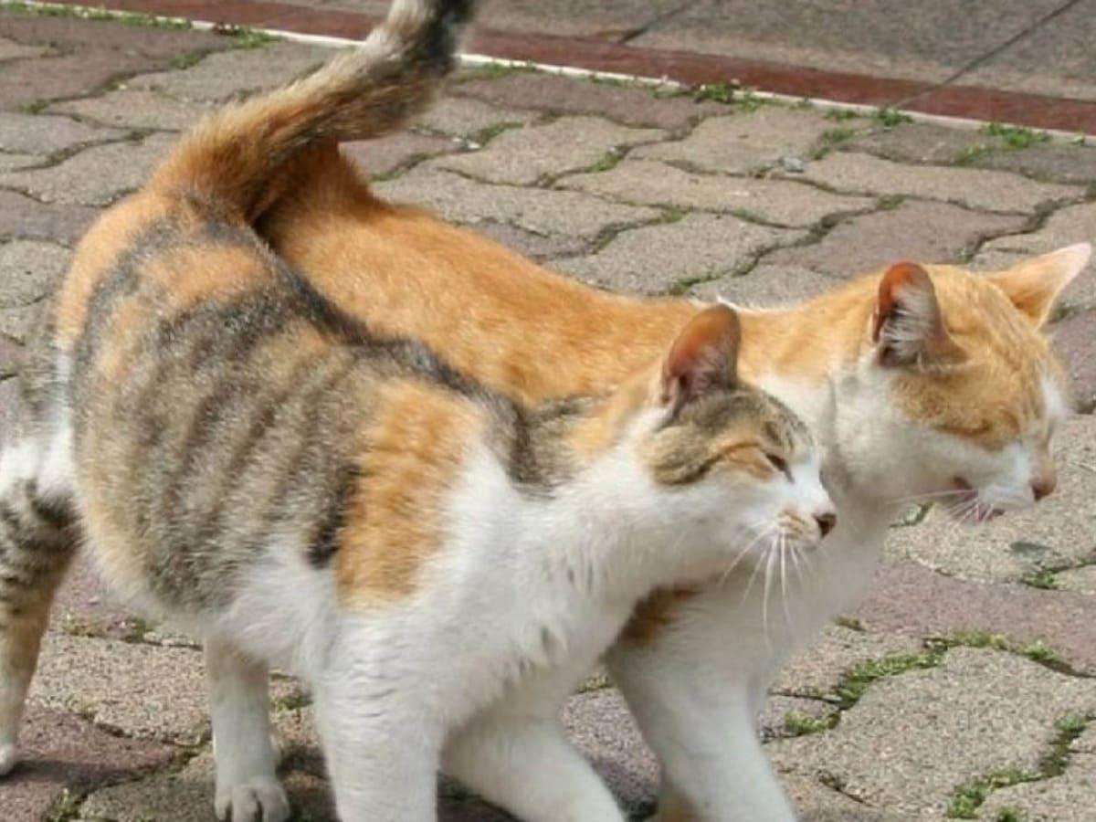 Ужгородців просять підписати петицію про стерилізацію безпритульних тварин у місті фото
