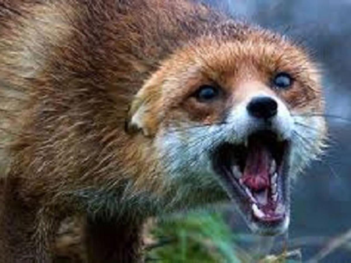 На Ужгородщині у тварини виявили сказ фото