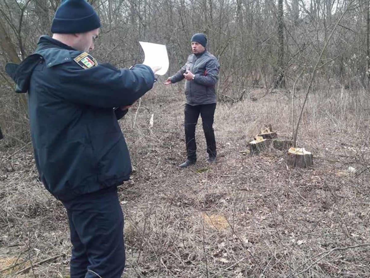 В Ужгороді в міському парку невідомі вирізали 19 дерев триває розслідування фото