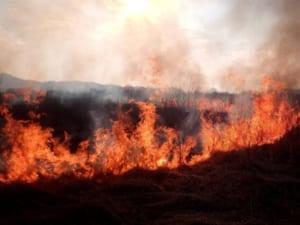 """Гасили 3 години: в """"Долині нарцисів"""" сталася потужна пожежа"""