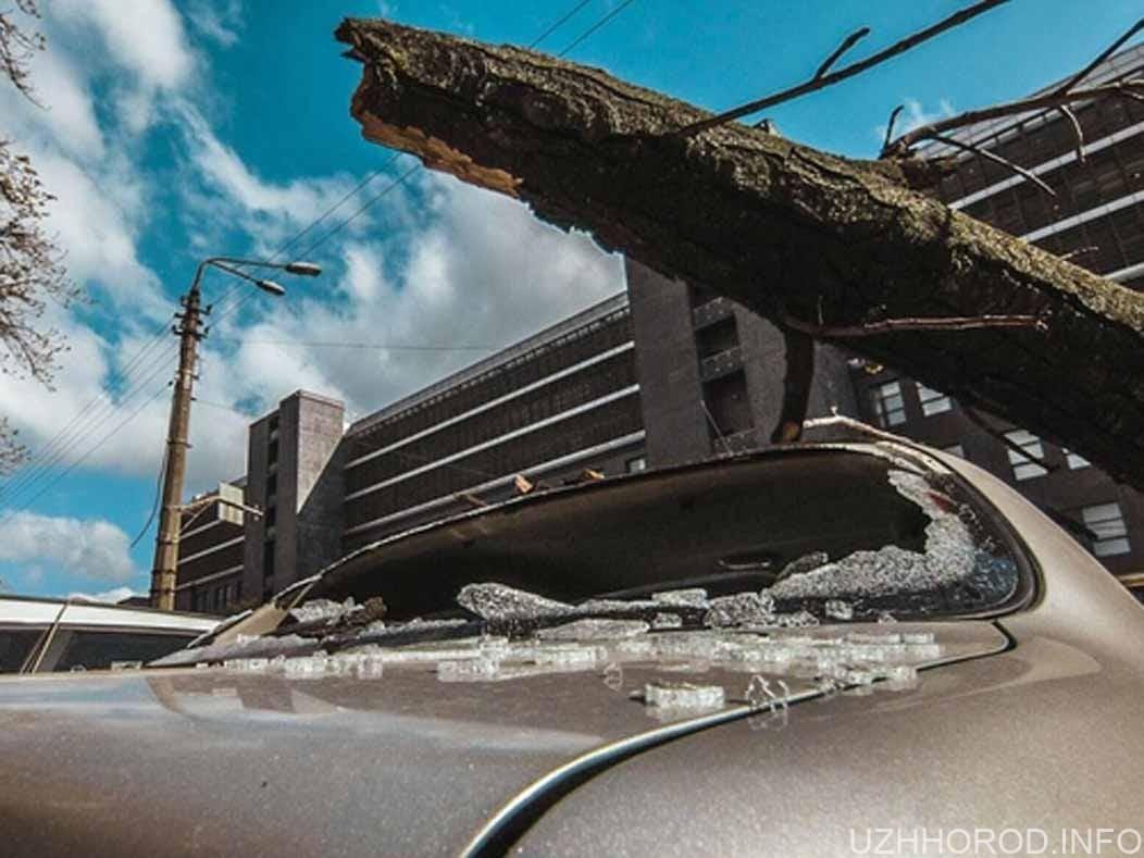 В Ужгороді дерево впало на три автомобіля фото