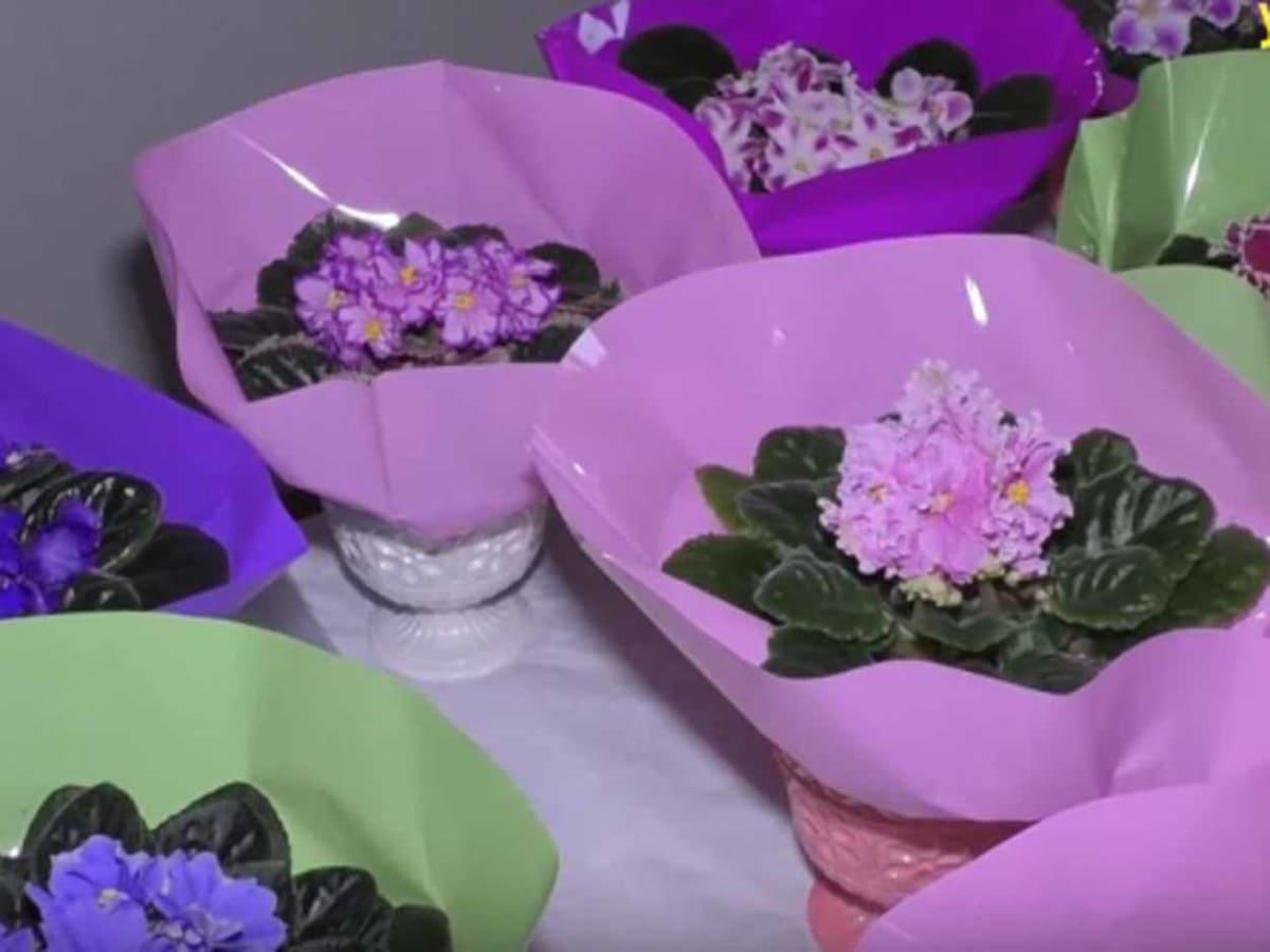 В Ужгороді відкрили виставку фіалок фото
