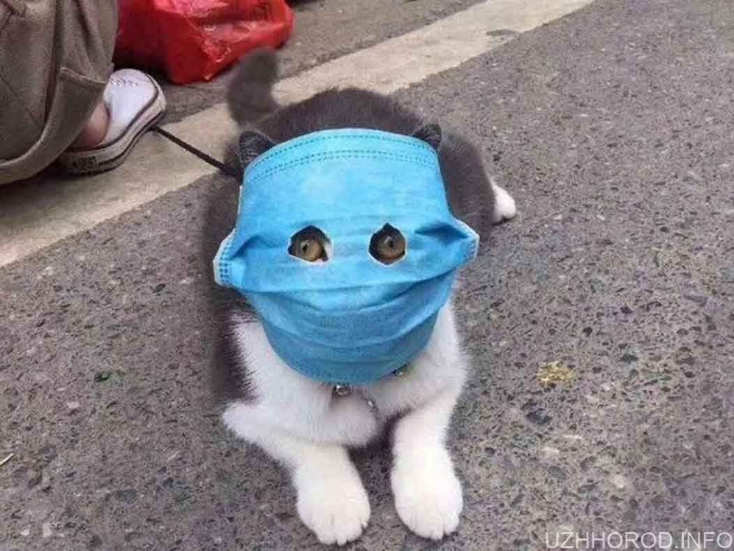 Чи здатні хатні тварини захворіти на коронавірус фото