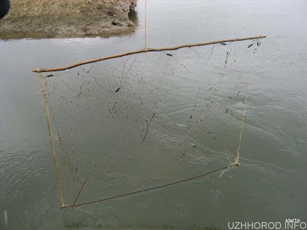 на Ужі викрили двох рибалок фото
