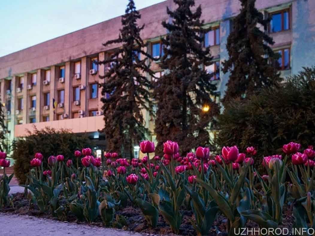 Ужгород вражає красенями-тюльпанами