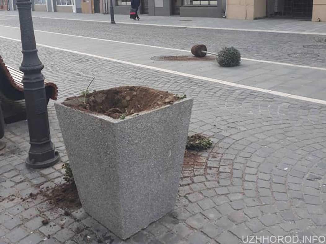 В Ужгороді чоловік пошкодив квітник та гірлянду на пішохідному мості фото