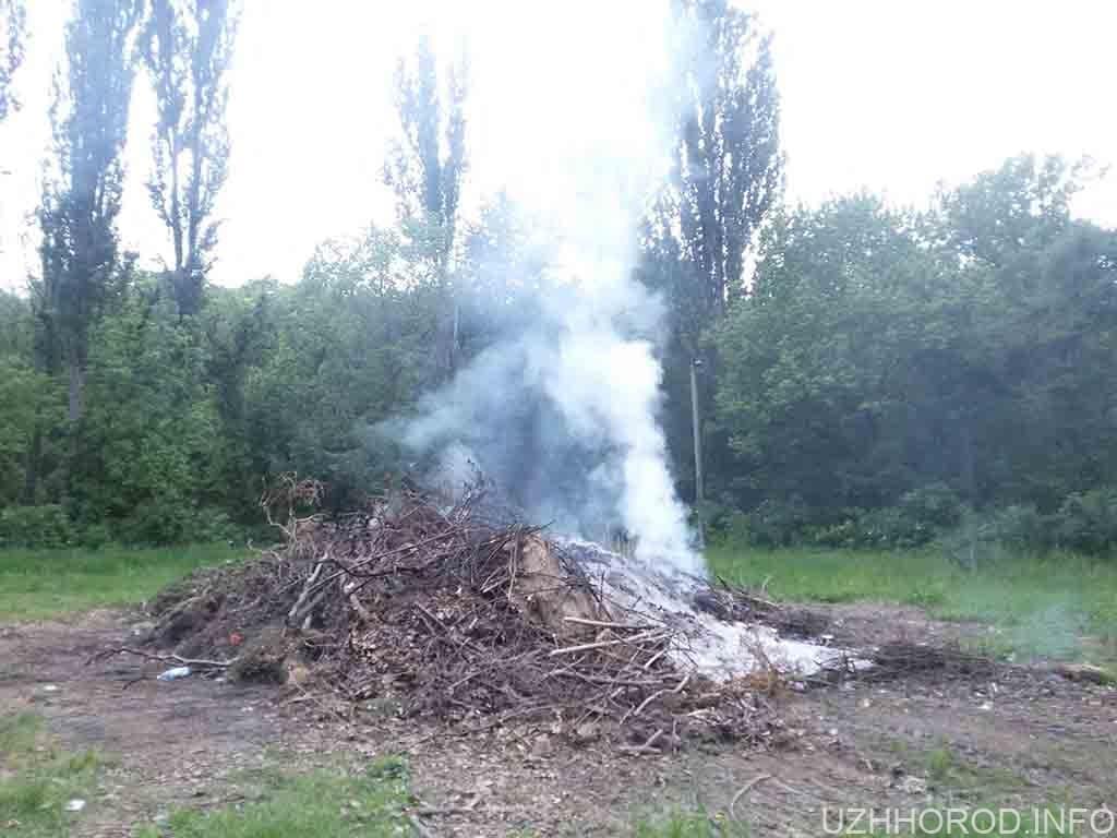 четверту добу в парку горить сміття фото