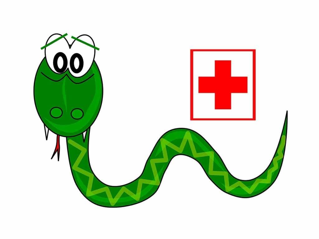 В 2020 році укусів зміями на Закарпатті не виявлено фото