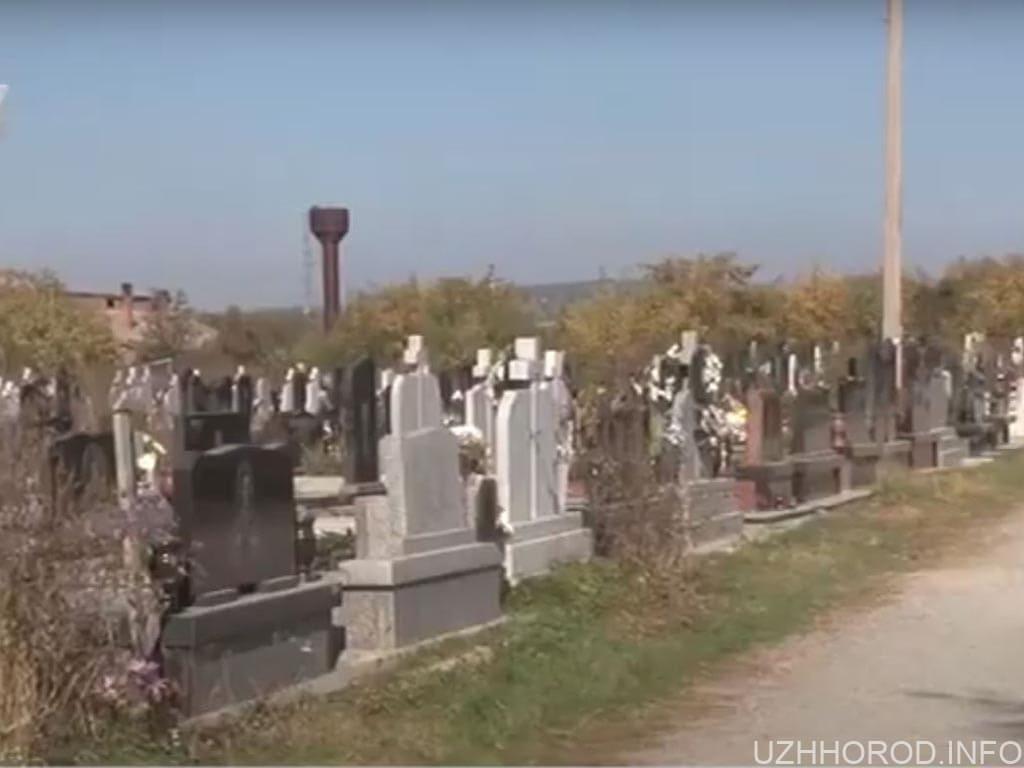 З могил в Барвінку викрадають багаторічні хвойні рослини фото