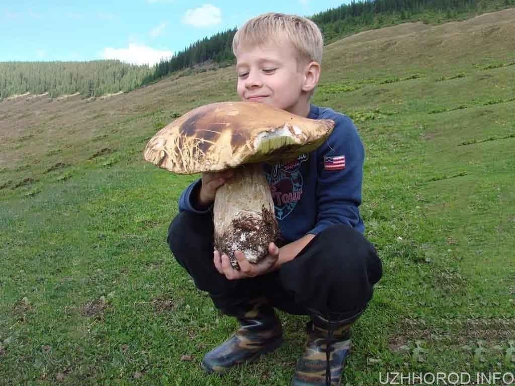 Величезний білий гриб фото