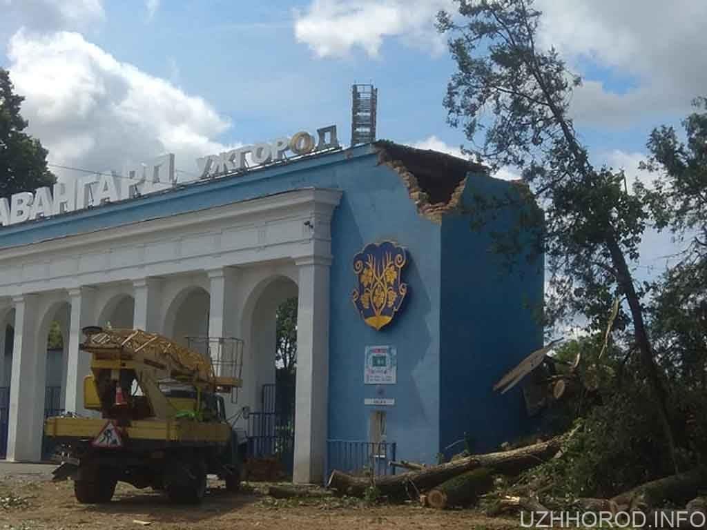 дерево проломило вхідну споруду стадіону Авангард фото