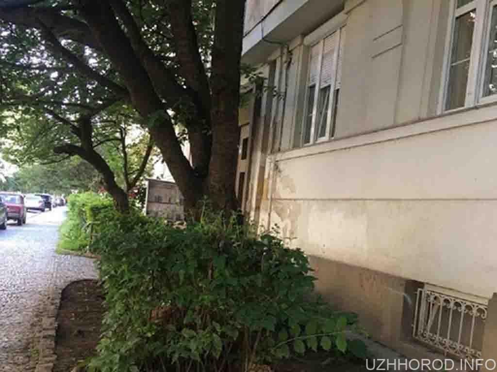 Мер Ужгорода дав дозвіл на нищення ще однієї історичної будівлі фото