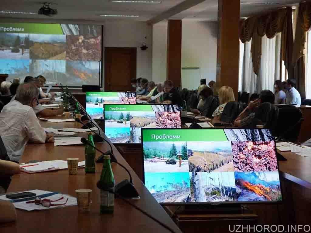 Сім грантових проєктів реалізуються в Ужгороді