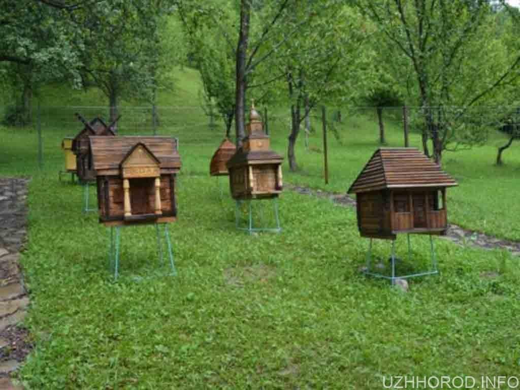 пасіка з рідкісними автохтонними бджолами фото