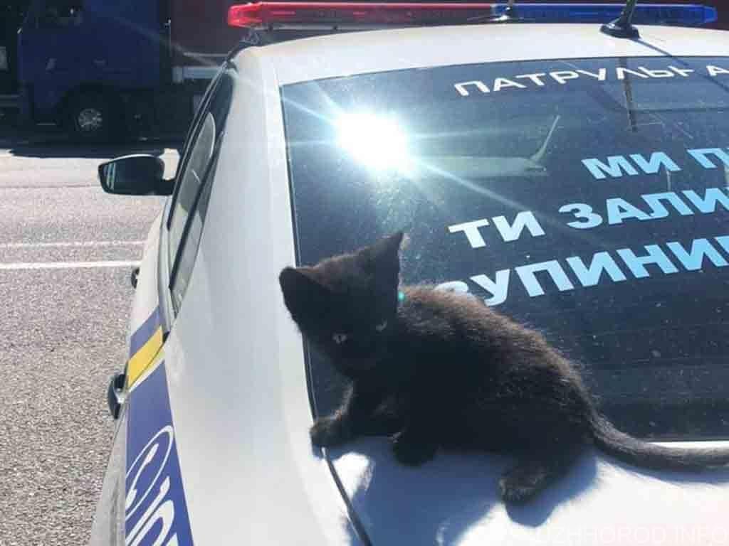 патрульні допомогли кошенятові фото