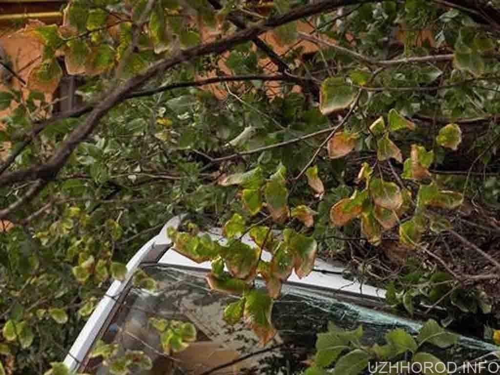 повалене учора дерево пошкодило автівку фото
