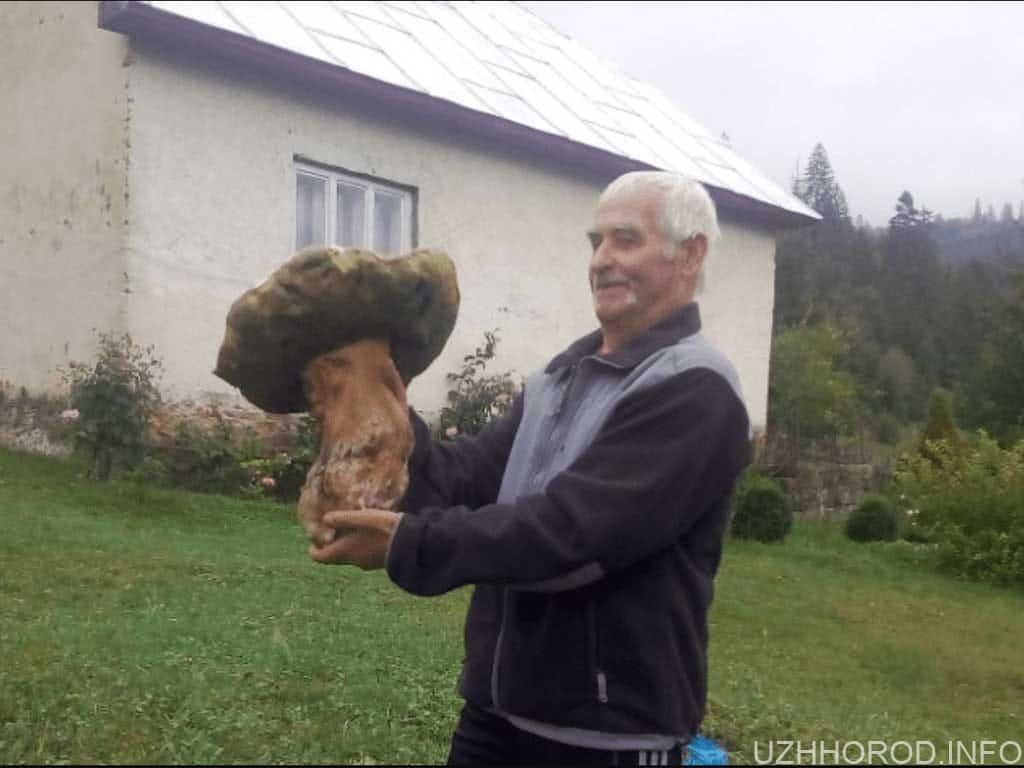білий гриб 4 кілограми фото