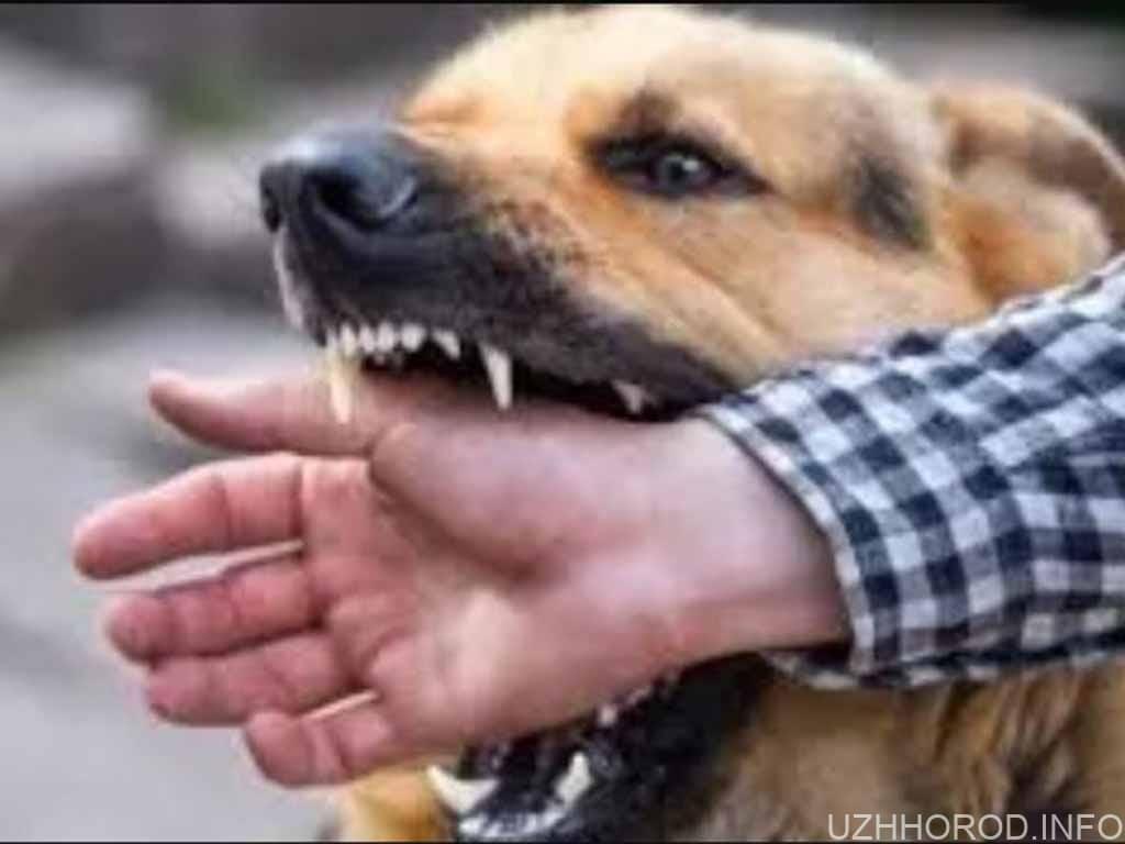 пес укус собака фото