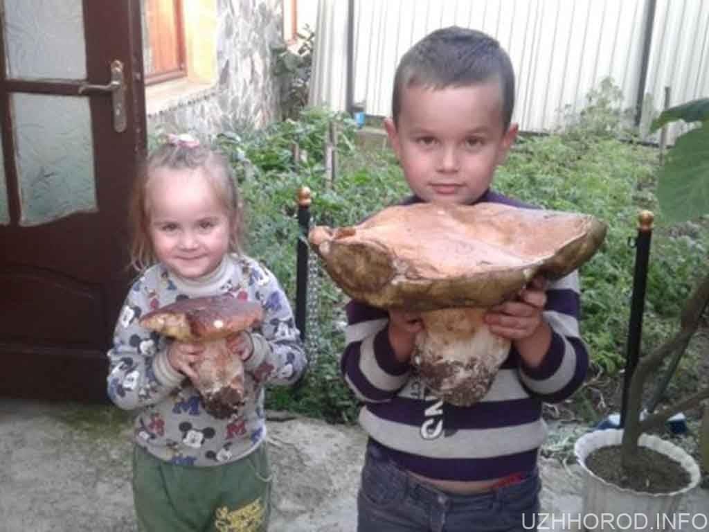 Закарпатець знайшов у лісі двокілограмового боровика фото