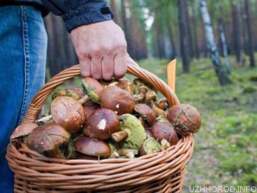 ліс корзина гриби фото