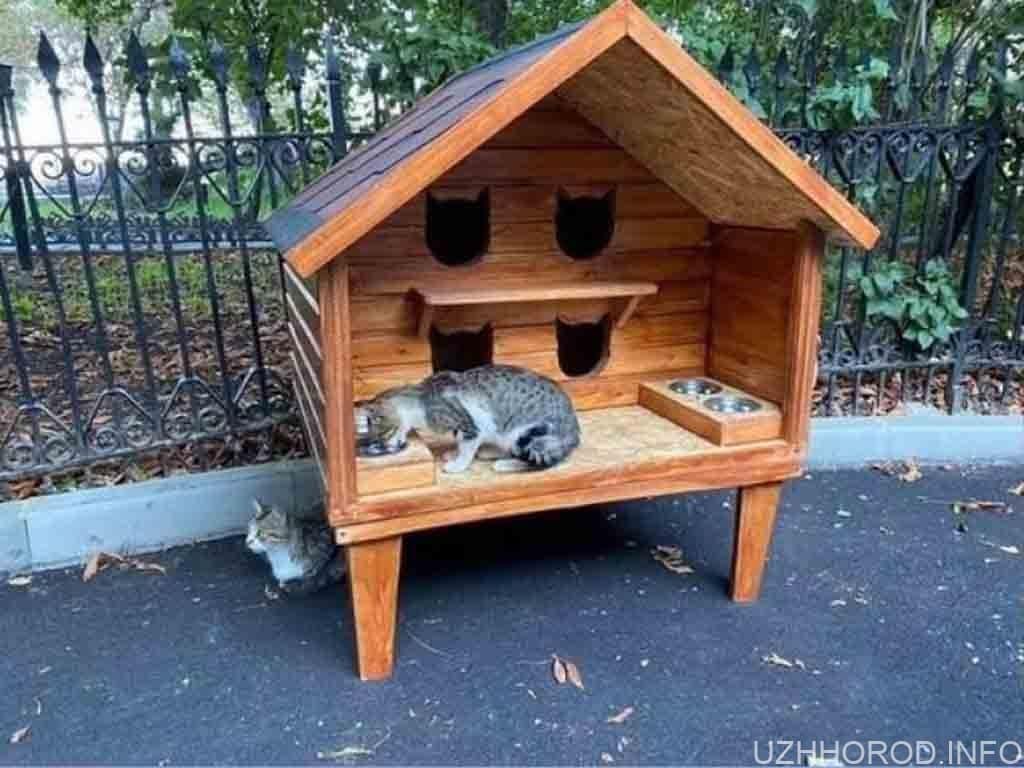 будинок для котів фото