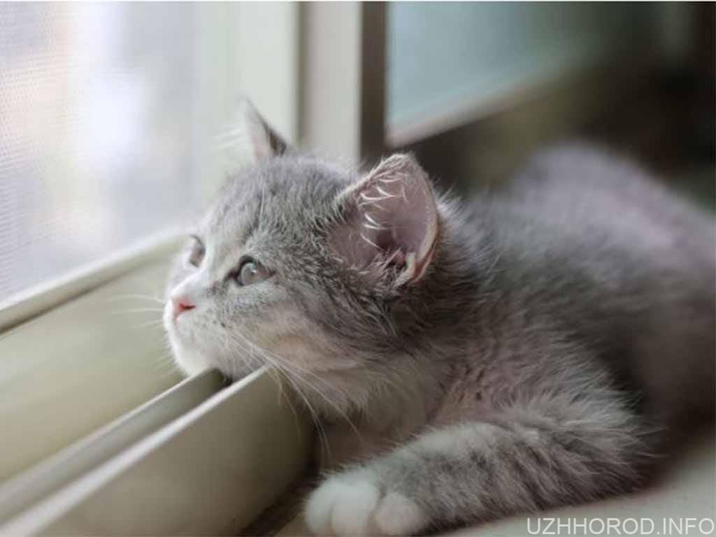 кіт вікно фото