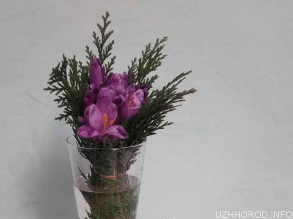 квіти червона книга шафран фото