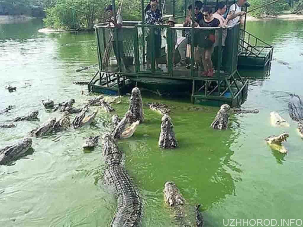 крокодиляча ферма фото