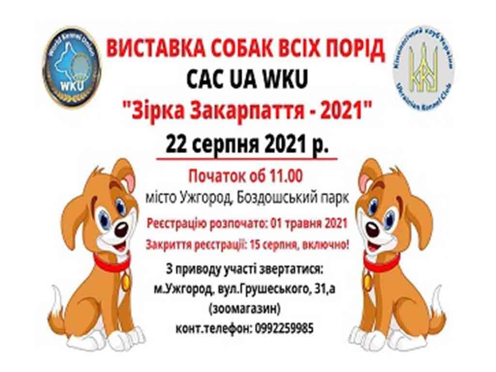 реєстрація виставка собак фото