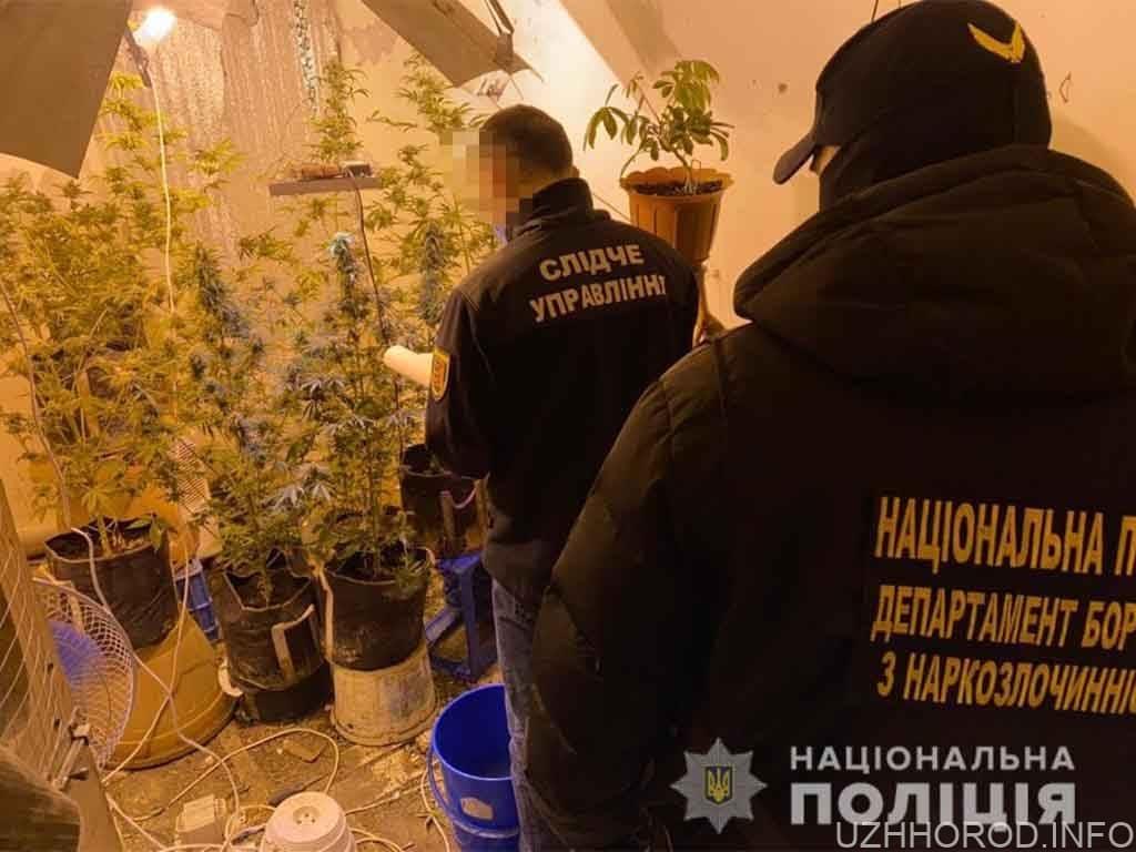 наркотики вирощування кримінал фото