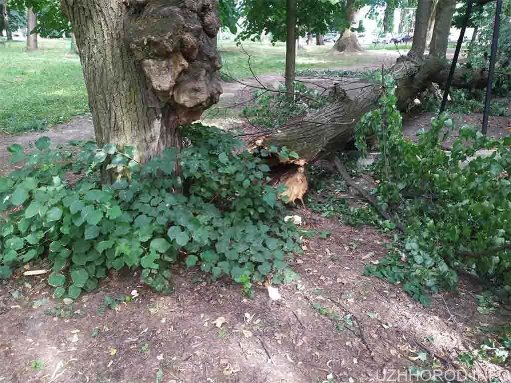 """У парку """"Підзамковому"""" не зрізали дерева під будівництво атракціонів (ФОТО)"""