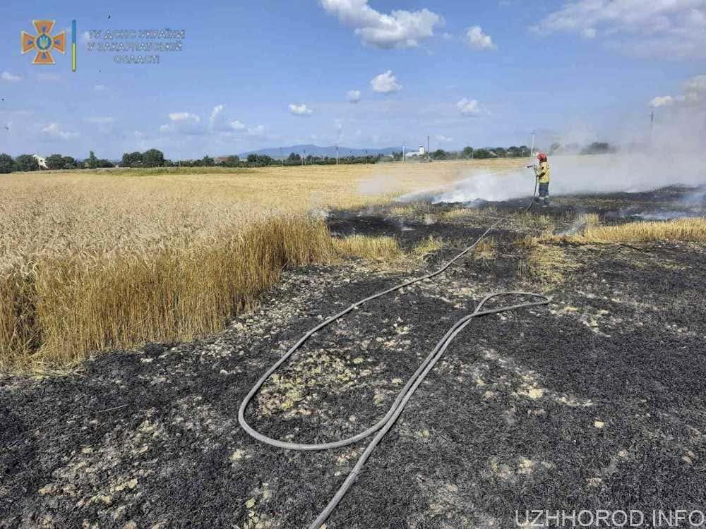 пожежа пшениця поле фото