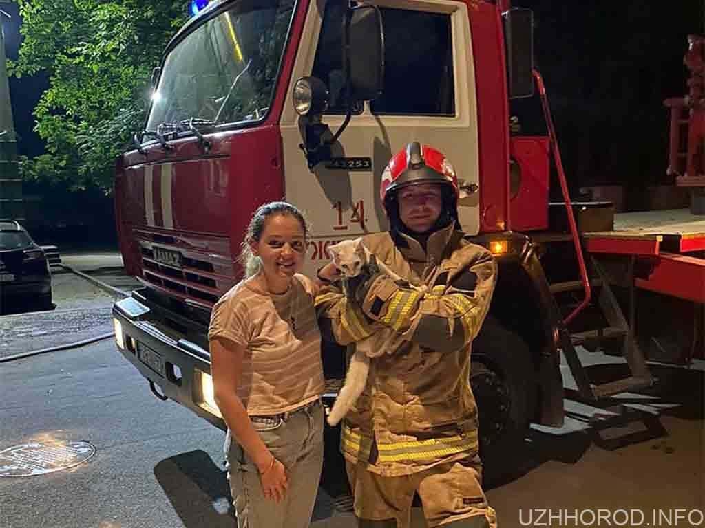 Ужгородські рятувальники допомогли коту, який не міг спуститися з дерева