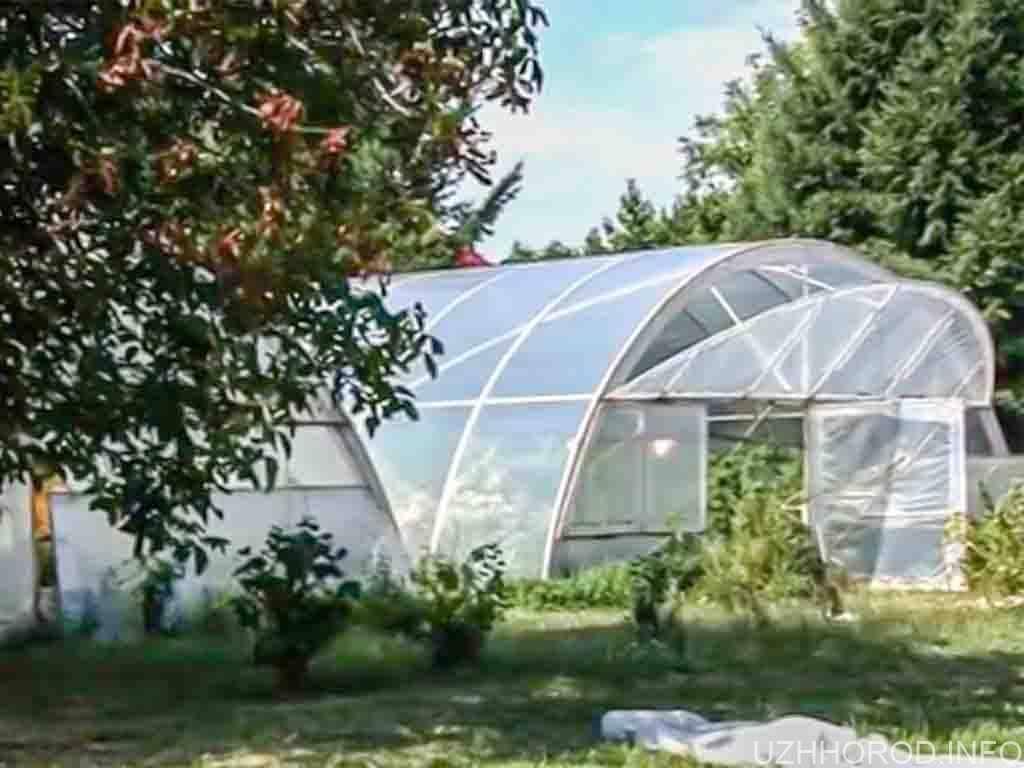 В Ужгороді семінаристи вирощують овочі (ВІДЕО)