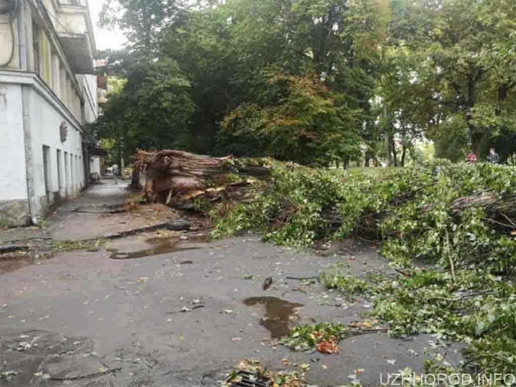 буревій пошкодив 7 дерев фото