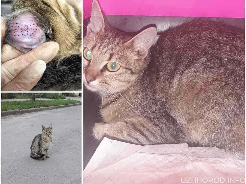простерилізувати безпритульних котів фото